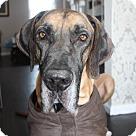 Adopt A Pet :: Hambone