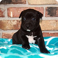 Adopt A Pet :: Egan - Baton Rouge, LA