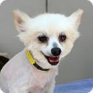 Adopt A Pet :: Janie B