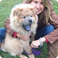 Adopt A Pet :: ULI - Dix Hills, NY