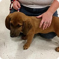 Adopt A Pet :: Buster in CT - East Hartford, CT
