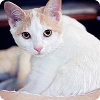 Adopt A Pet :: Myles - Markham, ON