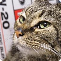 Adopt A Pet :: Whiskers Sassy Pants - Cincinnati, OH