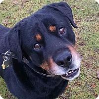 Adopt A Pet :: Zulu - Frederick, PA