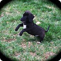Adopt A Pet :: Seamus - Ijamsville, MD