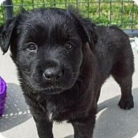 Adopt A Pet :: Mick $250 - Seneca, SC