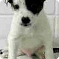 Adopt A Pet :: Finn-ADOPTION PENDING - Boulder, CO