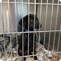 Adopt A Pet :: Skyler - Miami, FL