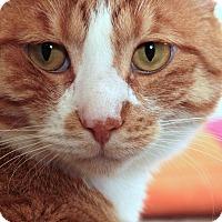 Adopt A Pet :: Joshua REdman - St. Louis, MO