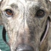 Adopt A Pet :: Brooke - Canadensis, PA