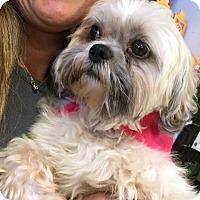 Adopt A Pet :: Goodman - Phoenix, AZ