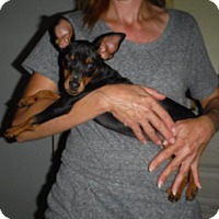 Adopt A Pet :: Lindy - Manchester, NH