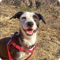 Adopt A Pet :: Austin - Irvine, CA