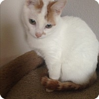 Adopt A Pet :: Zachary - San Ramon, CA