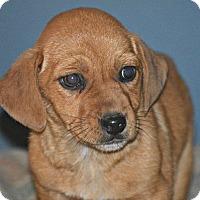 Adopt A Pet :: Kalisa~adopted! - Glastonbury, CT
