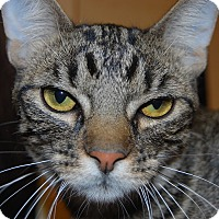 Adopt A Pet :: Dixon - Whittier, CA