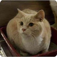 Adopt A Pet :: Oscar - Stuarts Draft, VA