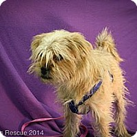 Adopt A Pet :: Toto - Broomfield, CO