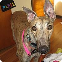 Adopt A Pet :: Salem (Atascocita Salem) - Florence, KY