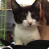 Adopt A Pet :: Rufus - Island Park, NY