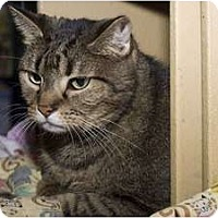 Adopt A Pet :: Meeko - New Port Richey, FL