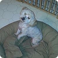 Adopt A Pet :: SYDNEY - Bowie, TX
