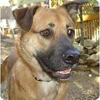 Adopt A Pet :: Patticake - Nashville, TN
