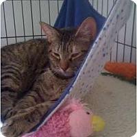 Adopt A Pet :: Hanna - Monroe, GA