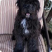 Adopt A Pet :: Bonnie - Russellville, KY
