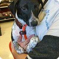 Adopt A Pet :: Max IN CT - East Hartford, CT