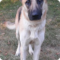 Adopt A Pet :: Pria - Louisville, KY