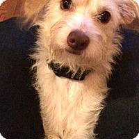 Adopt A Pet :: Henry-Adoption Pending - Boulder, CO