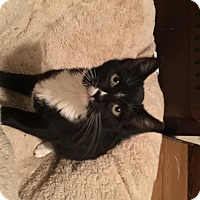Adopt A Pet :: Adele - Homewood, AL