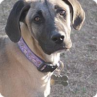 Adopt A Pet :: Penny - El Paso, TX