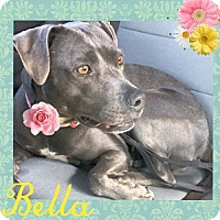 Adopt A Pet :: Bella - Huntington Beach, CA