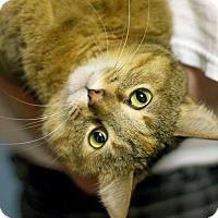 Adopt A Pet :: Sunny - Troy, MI