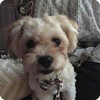 Adopt A Pet :: CUBBY - Minnetonka, MN