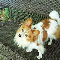 Adopt A Pet :: Renny (in GA) - Marietta, GA