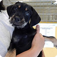 Adopt A Pet :: Matt Ryan - Suwanee, GA