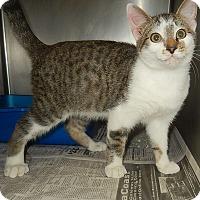 Adopt A Pet :: Brian - Newport, NC