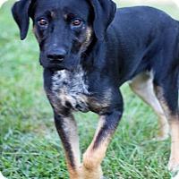 Adopt A Pet :: Koda - Waldorf, MD