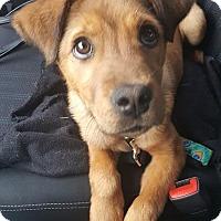 Adopt A Pet :: Ryder - greenville, SC