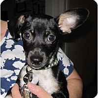 Adopt A Pet :: Vinnie - Kingwood, TX