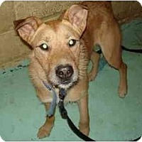 Adopt A Pet :: Olivia - New Kensington, PA