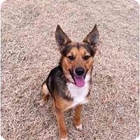 Adopt A Pet :: Cuba - Alexandria, VA