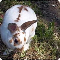 Adopt A Pet :: Spice - Santee, CA