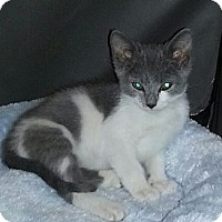Adopt A Pet :: Debbie - Whitestone, NY
