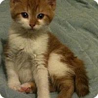 Adopt A Pet :: Petunia - Sterling Hgts, MI
