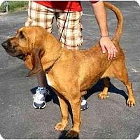 Adopt A Pet :: Rita - Carrollton, GA