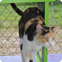 Adopt A Pet :: Mia - New Iberia, LA